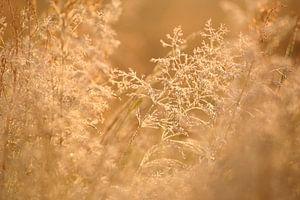 Ochtendstond heeft goud in de mond van Saskia van den Berg Fotografie