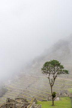 Ein einsamer Baum von Joost Potma