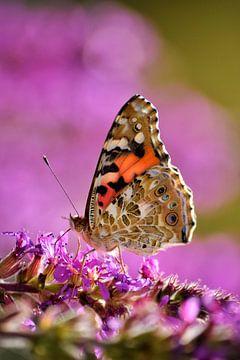 Vlinder & Lavendel van Simdwlf