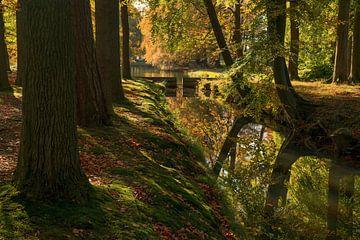 Maintenant, les feuilles tombent rapidement sur Joris Pannemans - Loris Photography