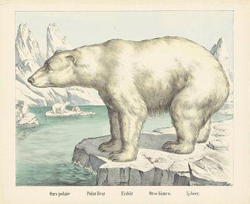 Ijsbeer, firma Joseph Scholz, 1829 - 1880