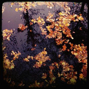 Bladeren in het water van Kuba Bartyński