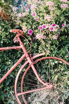 Rosa Fahrrad von Patrycja Polechonska