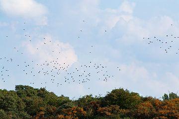 aus der Vogelperspektive von Eva Overbeeke