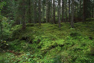 Grüner Wald von Heike Hultsch