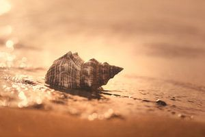 Geluid van de zee