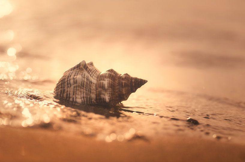 Geluid van de zee van Tanja Riedel