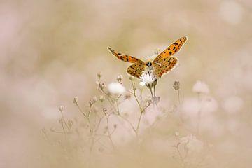 Schmetterling auf einer Wolke von Gypsophila von Lia Hulsbeek Brinkman