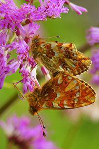 Het vlindereffect  van
