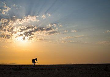 Wild paard in de Namib woestijn bij Aus, Namibië van Teun Janssen