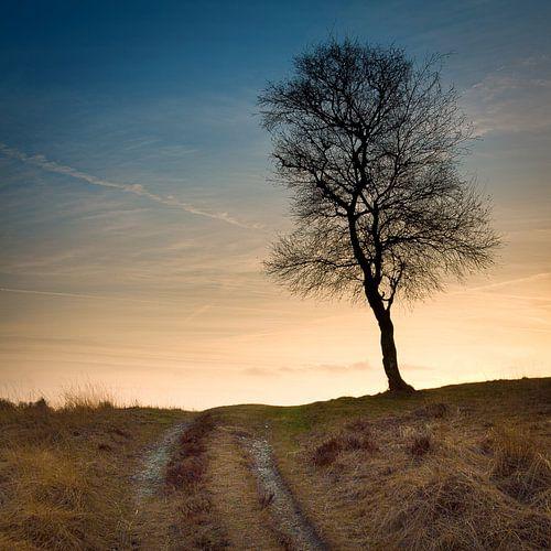De boom op de heuveltop