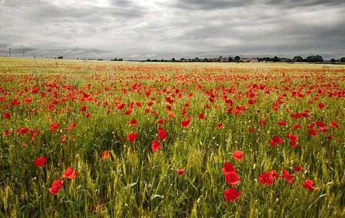 Il campo di fiori van
