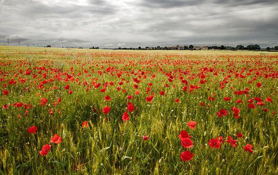 Il campo di fiori