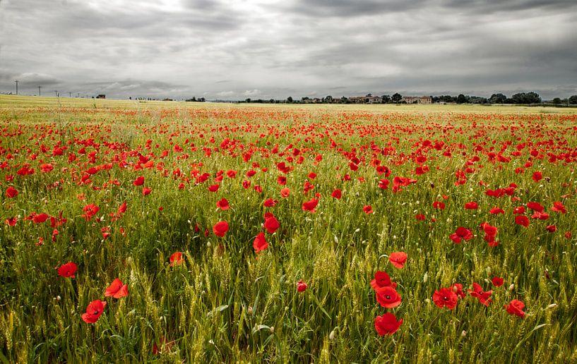 Il campo di fiori van Frank Quax