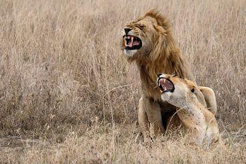 Leeuw en leeuwin van Lien van der Laan