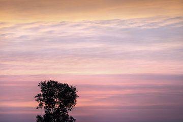 Zonsondergang met boom van Dennis Claessens