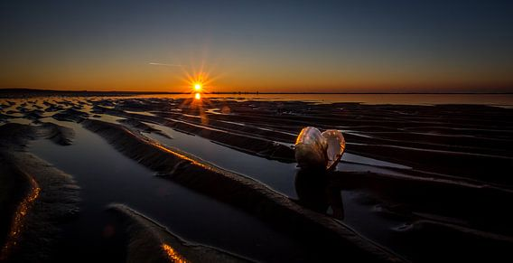Sunset shell van Linda Raaphorst