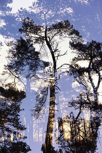 Dubbelbeeld boom nr.2 van Marjan van Herpen
