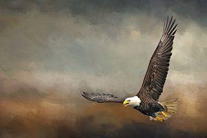 Vliegende Arend In Storm van