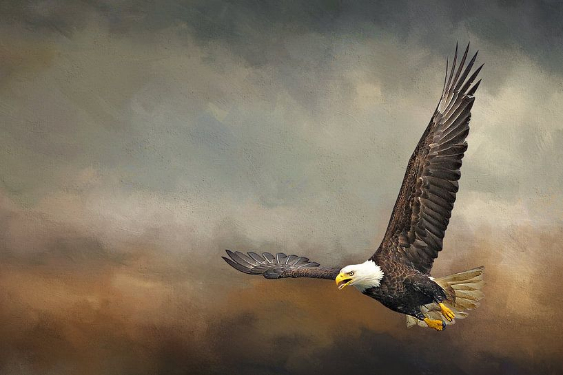 Vliegende Arend In Storm van Diana van Tankeren