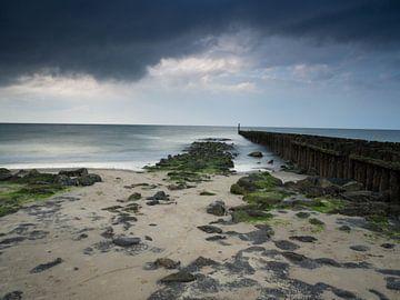 Zee  van Joyce Roth