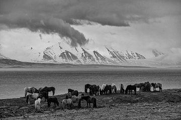 IJslandse Paarden von Ruud van der Lubben