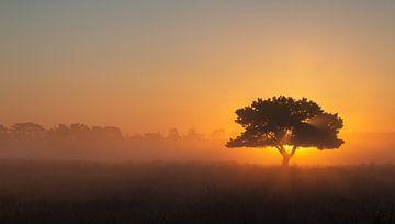 Am frühen Morgen von Manon Zandt