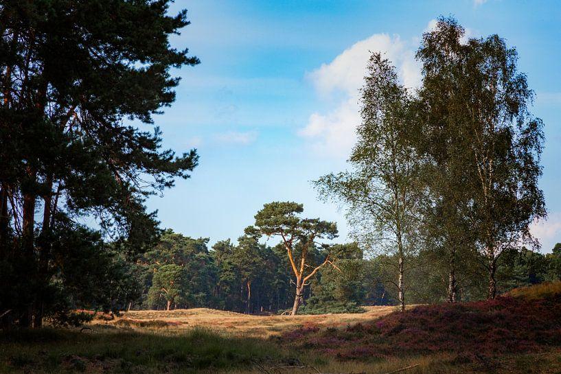 Eenzame boom van Jan van der Knaap