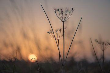 Morgenschönheit von Tania Perneel