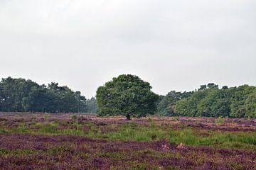 Schöne Naturlandschaft mit blühendem Heidekraut von Robin Verhoef
