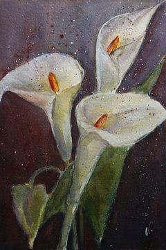 Weiße Blüten - Calla von Christine Nöhmeier
