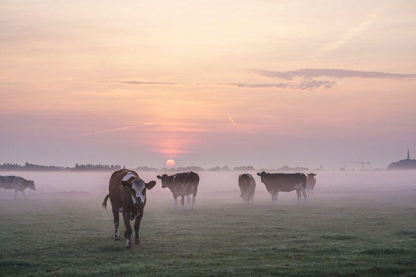Cows in the Mist van Dirk van Egmond