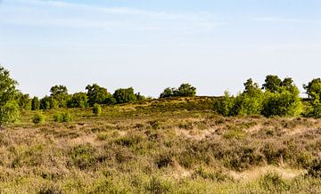 Landschap in NP Maasduinen van