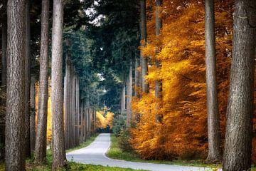 Forest Road von Kees van Dongen