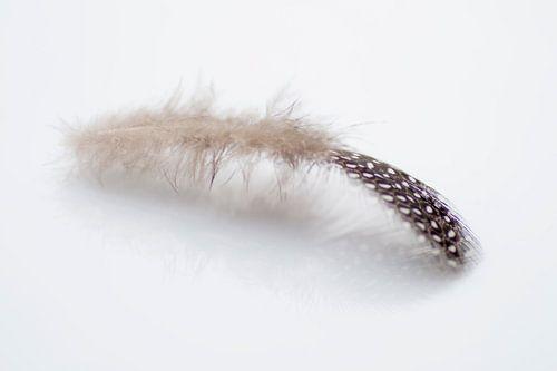 Feather 1 van