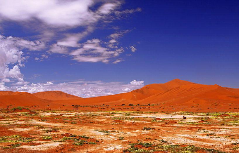 Beautiful Namib-Desert, Namibia van W. Woyke