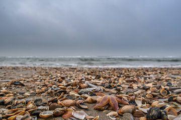 Strand vol met schelpen en zeesterren van Inge Heeringa