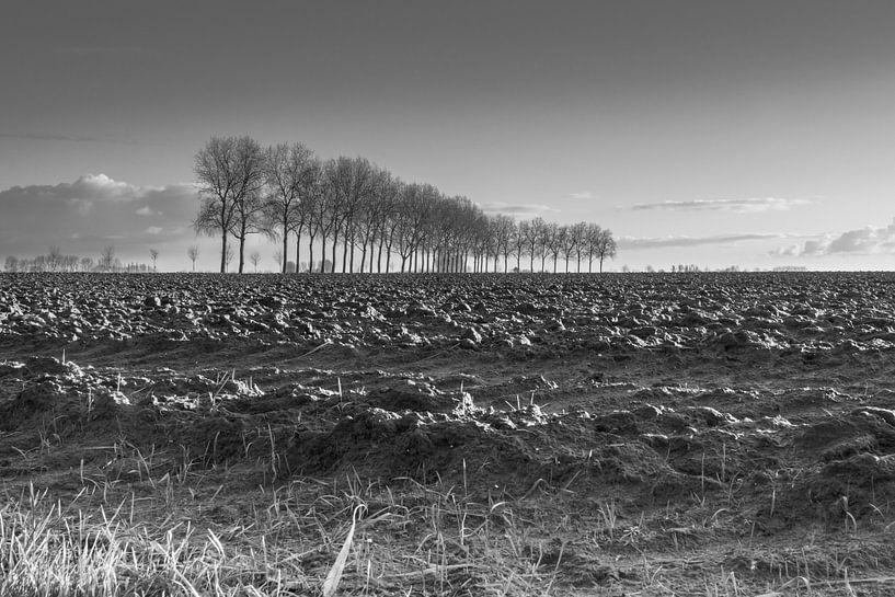 Bomenrij langs de Sint Pietersdijk, zuidelijk van Sluis. von Nico de Lezenne Coulander