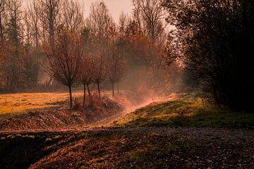 Ein nebliger Sonnenaufgang von Stephan Scheffer
