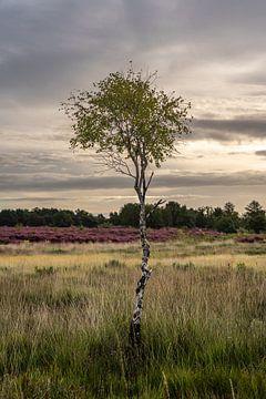 Die Limburger Heide 2 von visitlimburg