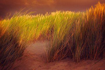 Casquer l'herbe dans la tempête.