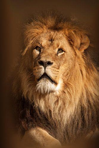 Leeuw kijk omhoog van