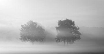 Morgennebel bedeckt die Felder von Wil van der Velde