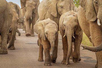 Een kudde olifanten met kleintjes in het midden. van Gunter Nuyts