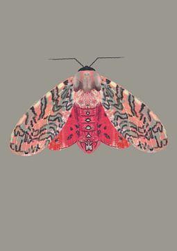 Mot roze rood op gekelderde achtergrond van Angela Peters