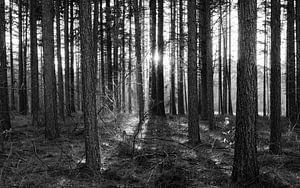 Bos (zwartwit)