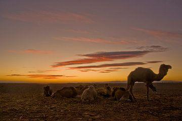 Schepen van de woestijn von Olaf Piers