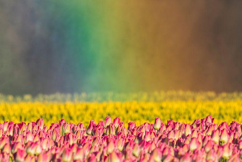 Tulpen in regenbooglicht van Karla Leeftink