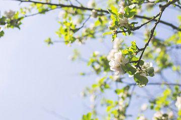 Witte bloesem in de lente van Jeantina Lensen-Jansen