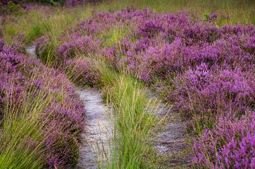 violetter Pfad von natascha verbij
